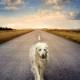 perro-abandonado-carretera