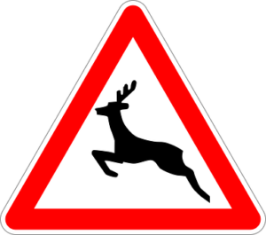 animales-en-la-carretera